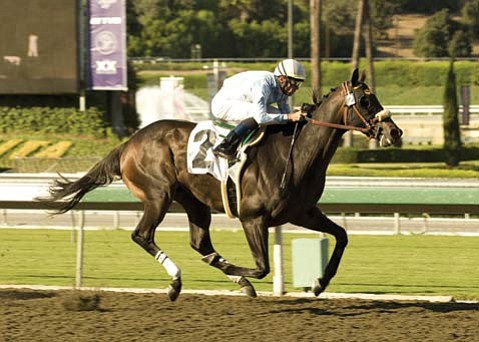 Gentle Romeo led all the way in his victory in the seven-furlong sprint at Santa Anita's Oak Tree meeting on Wednesday, October 8.