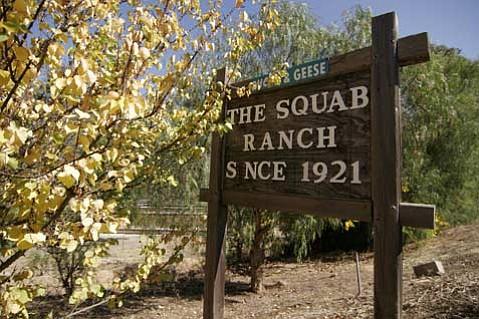 The Squab Ranch