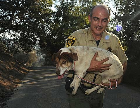 John Perry from Santa Barbara County Animal Services carries Cleo back to safety from the dog's Mountain Drive home.