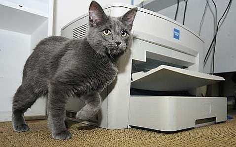 Davey the Cat
