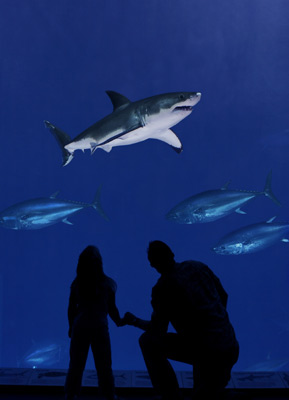 great whites on display
