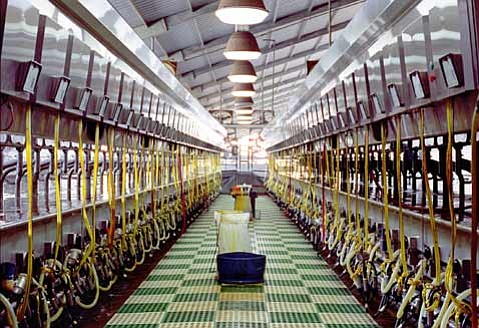 "One of the photographs on display at this weekend's conference, ""Dairy Interior, San Joaquin Valley"" (2008)."