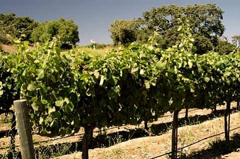 Sunstone Vineyards & Winery (Santa Ynez Valley, Santa Barbara County)