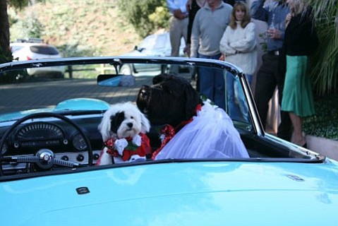 "Canine couple Heartly and Sasha await their driver following their ""mutrimony."""