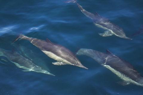 Whale watching on the <em>Condor Express</em>.