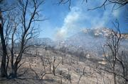 Knoll at top of Inspiration Point area is completely burned out.