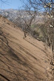 Slides in upper Rattlesnake Canyon below Tin Can Flats will need to be cleaned out to make passage safe.