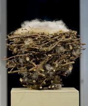 "Martha Day's ""Nest."""