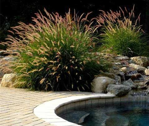Ornamental grass maintenance workwithnaturefo