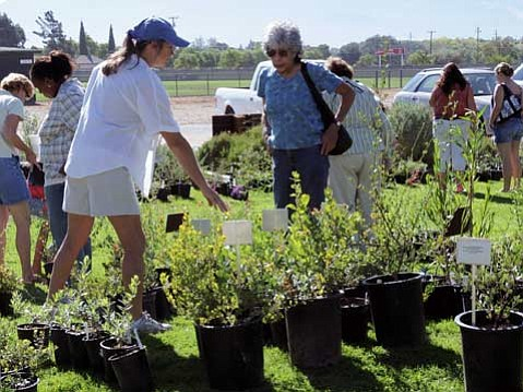 Santa Ynez Valley Natural History Society to Host 4th Annual Plant Sale