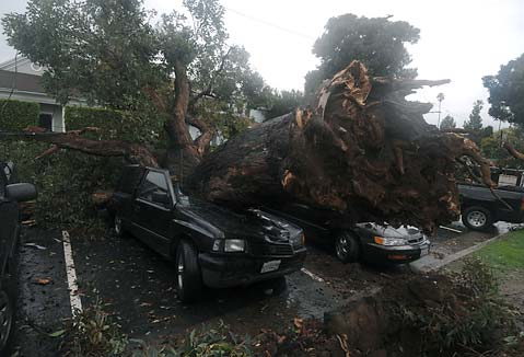Fallen Trees Power Poles Crush Cars On Haley Street