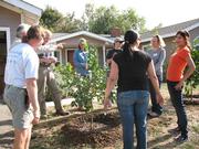 Members of Team B welcome and name one of Manwa Azzam's fruit tree