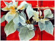 Violet Stegall, White Poinsetta, Watercolor on Paper, 10.5 x 14.5 inches