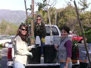 Ojai Trees members Kathy Nolan, Linda Harmon, and Caryn Bosson unload 15 gallon trees during an early Ojai Trees planning event.