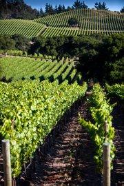 Hilliard Bruce Vineyards