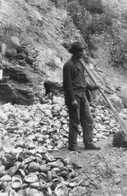 By the turn of the century, Santa Barbara was home to one of California's most successful fishing enterprises.