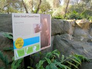 Asian Small-Clawed Otter exhibit
