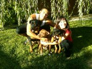 Vincent Velasquez with his girlfriend and three dogs