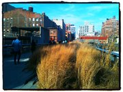 Walking the High Line, where nature intersects with the city.