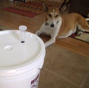 Connor keeps watch over Emily's brewing equipment in Lompoc, CA