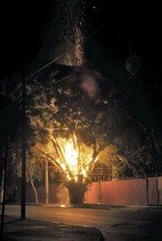Tree fire on North Quarantina Street (November 11, 2012)