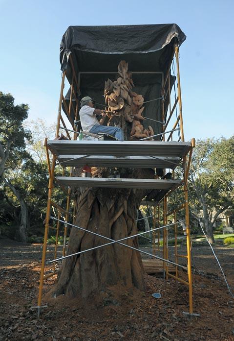 Montecito S Massive Tree Sculpture