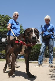 Trace (above, with S.B. County Animal Services volunteers)