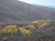 Looking back over the trees growing along middle Sespe River