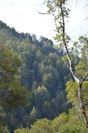 Big Sur's Ventana Wilderness