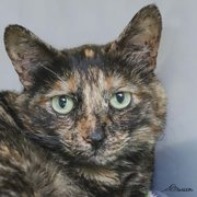 Malaya is available for adoption at ASAP.
