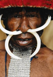 This Lani tribesman is dressed for a ceremony, which includes boar tusks through his septum.