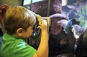 Cade Harrington gets an up-close look of aquatic life.