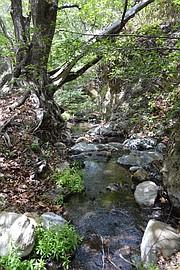 Birabent Creek