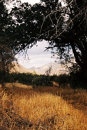 Looking at the San Rafael Mountains through a tree portal on the Lost Valley trail.