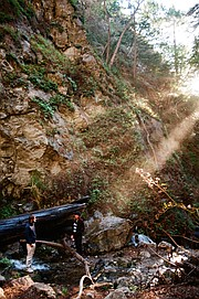 Along the Limekiln Falls trail