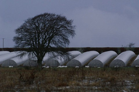 Hoop houses, resembling these at Monk Myre, Scotland, are likely to be permitted to 20 feet in height, though detractors find them a potential fire hazard and unsightly.