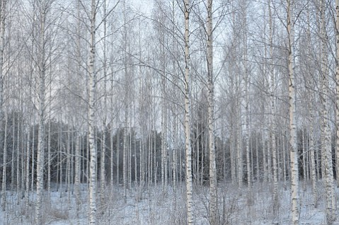 An artists' residency in Finland brought the chance to walk through woods during deep winter.