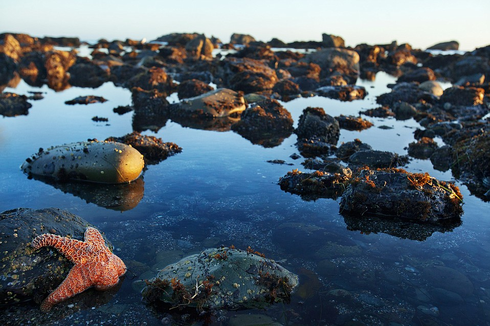 Tide-pooling Discoveries