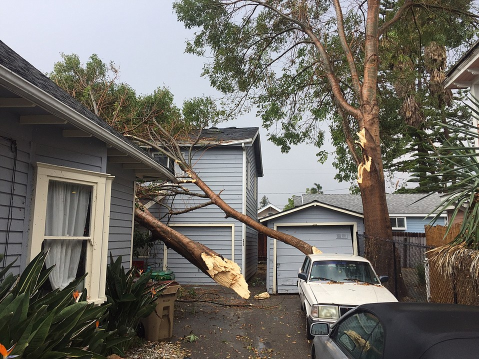 A tree toppled by the shearing winds crashed into a home on West Ortega Street where the power remains out as of 6:30 p.m. on Sunday.