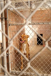 A dog in one of the kennels at the Humane Society
