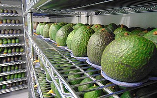 Apeel's plant-based coating has been tested to double the shelf life of avocados and other produce.