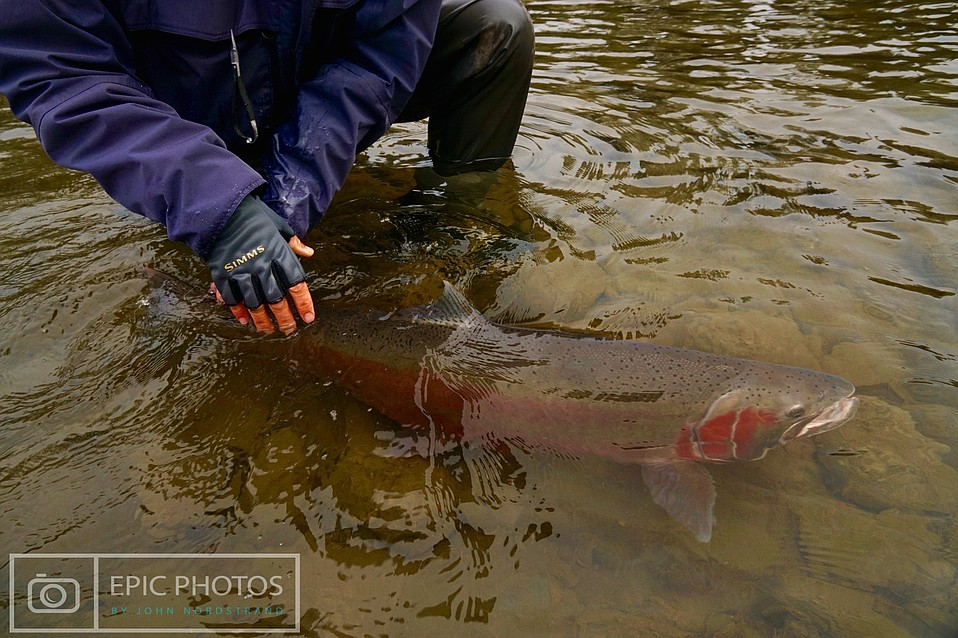 Santa barbara fish and politics for Santa barbara fishing