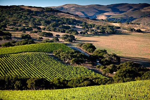 A vineyard in Santa Barbara County's wine country