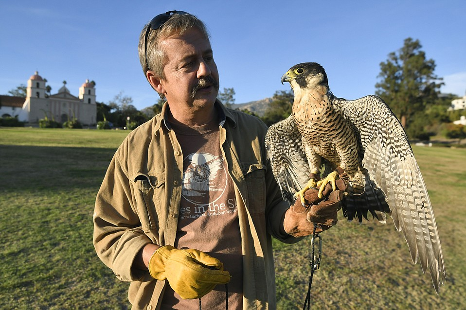Eyes in the Sky volunteer Chris Mersey exercises Kisa, a peregrine falcon, at the Santa Barbara Mission rose garden.