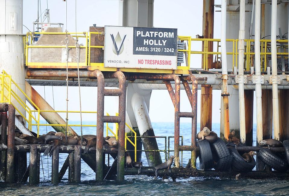 Platform Holly