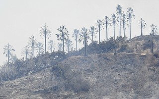 Following the Thomas Fire, scorched hills were left with little vegetation from Highway 150 through much of Montecito.
