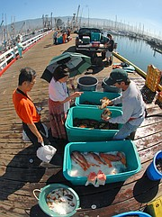 Every Saturday morning, commercial fishermen sell their seafood down at the Santa Barbara Harbor, as the fleet has done since the early 1980s.