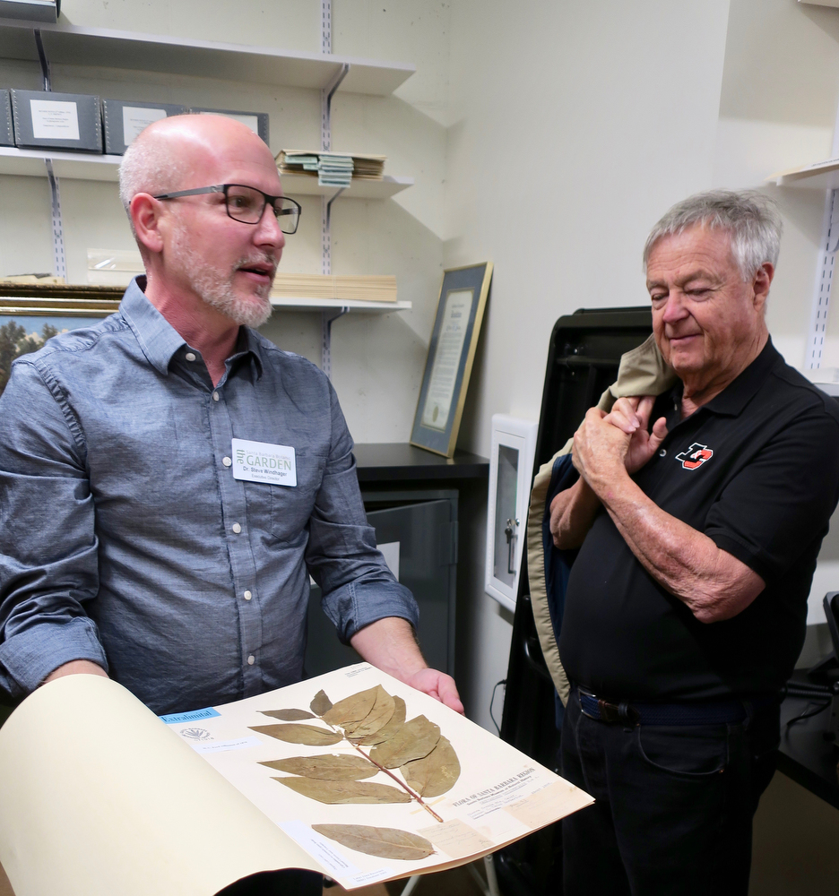 Executive Director Steve Windhager shares a spicebush specimen from 1895 in the Herbarium.