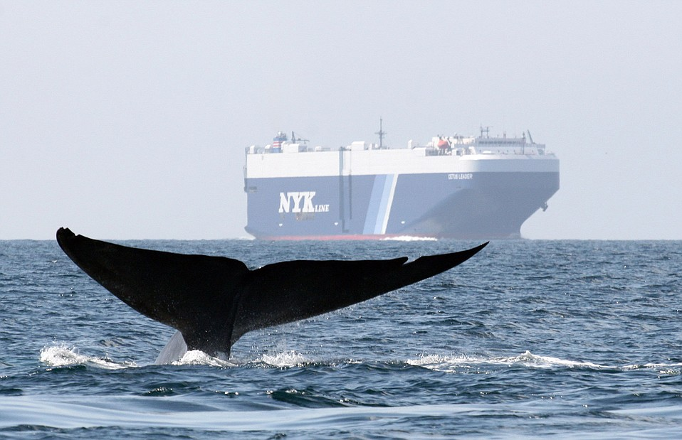 Whales and air quality both benefit from a program that rewards ships for slowing along the California coast.