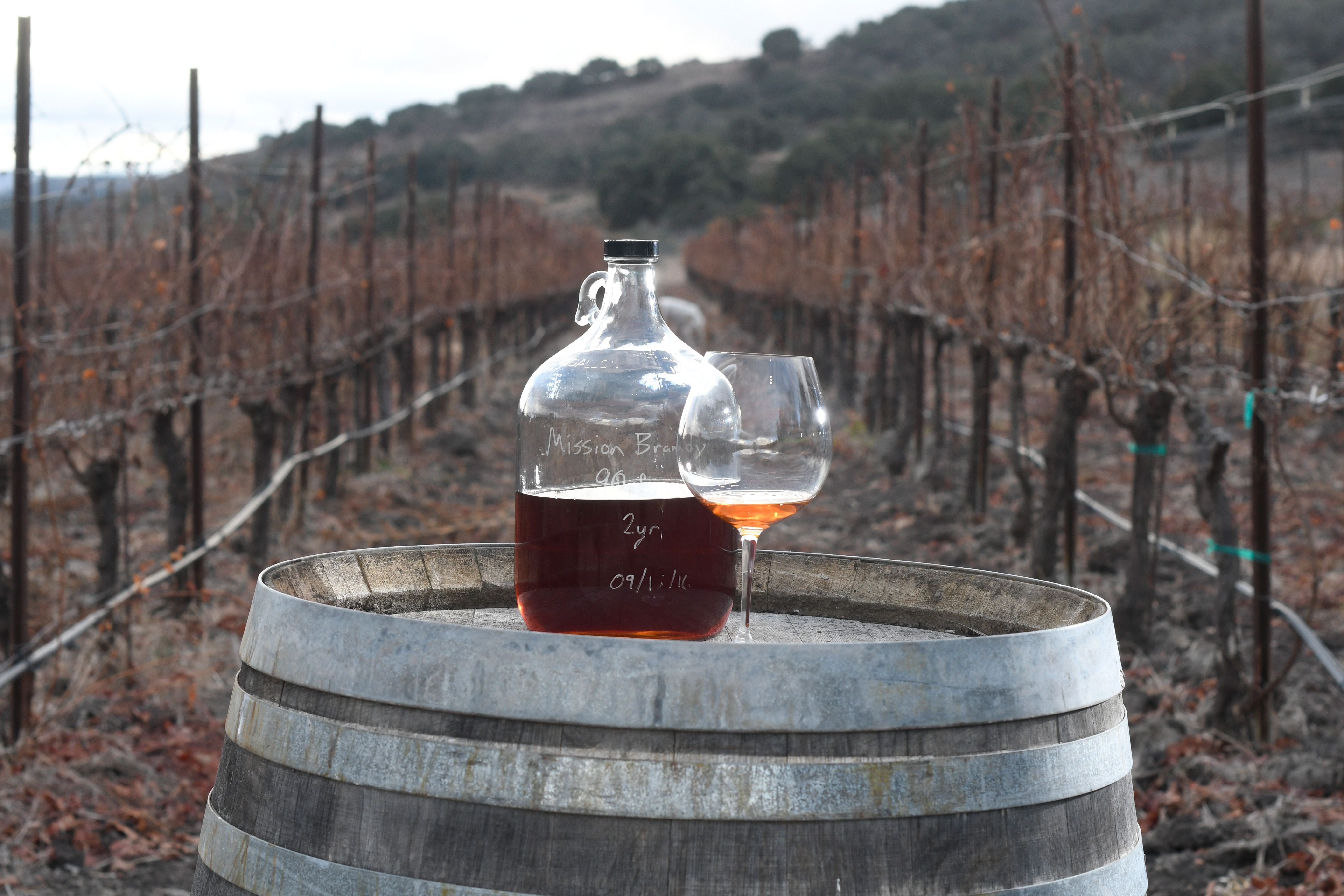 Jugs of Gypsy Canyonu0027s Angelica like this one are sold in 375 mL bottles. & Santa Barbarau0027s Ancient Wines Then and Now